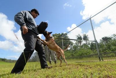 United States War Dog Association Chapter 1 Western Region