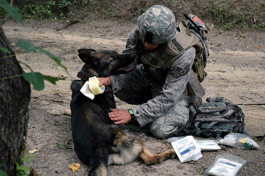 Combat Wounded Dogs Wound to Your Scout Dog